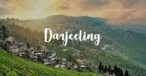 Dazzling Darjeeling