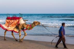 1597832618_708478-camel-ride-beach-puri-april-man-walks-his-decorated-looking-tourists-sea-odisha-india-popular-tourist-activity-114951488.jpg