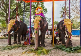 1602654429_967462-Embellished_elephants_in_Kerala.jpg